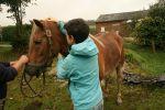 osteopathie-chevaux3
